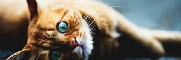 ¿Quién le pone el cascabel al gato en el reino de las medias tintas?