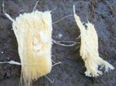 Aspecto de los tubérculos fibrosos que mastican y escupen: Izquierda, tubérculo antes de masticar; derecha, después; fuente